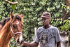 Grand Caymans - man helping with the horses<br /> To purchase digital file or purchase print e mail - DFriend150@gmail.com