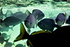 Fish swimming near surface................................................To purchase digital file or purchase print e mail - DFriend150@gmail.com