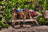 Horse saddles on stand..................................................................................To purchase digital file or purchase print e mail - DFriend150@gmail.com