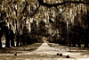 Spanish moss on live oak trees                                                                        Prints or digital files can be purchased by e mailing DFriend150@gmail.com
