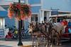 horse carriage waitng near flower pot