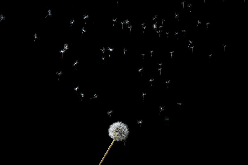 Raining seeds