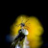 Spider water drop