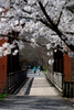 Walking on trail when dogwood trees in bloom -  to purchase contact Dan Friend DFriend150@gmail.com