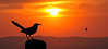 "Bird with insect sunset.....................to purchase - <a href=""http://bit.ly/1BasNEJ"">http://bit.ly/1BasNEJ</a>"