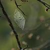 Spider webs with dew