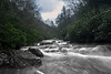"""Rapids on North Fork River near where enters the Blackwater River....................................to purchase - <a href=""""http://dan-friend.artistwebsites.com/featured/rapids-on-north-fork-river-dan-friend.html?newartwork=true"""">http://dan-friend.artistwebsites.com/featured/rapids-on-north-fork-river-dan-friend.html?newartwork=true</a>"""