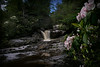 Mountain laurel and falls small stream..............................to purchase - http://bit.ly/Tw4jny