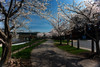 Rail trail in the spring