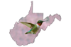 Ruby-throated Hummingbird  beautiful coloring