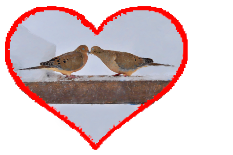 "Mourning doves kissing............................to purchase - <a href=""http://goo.gl/Dd2oK4"">http://goo.gl/Dd2oK4</a>"