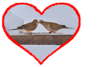 "Mourning doves kissing............................to purchase - <a href=""http://goo.gl/Dd2oK4"">http://goo.gl/Dd2oK4</a>"