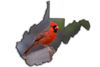 "Male cardinal one of the most recognizable birds....West Virginia's state bird.........................to  purchase <a href=""http://goo.gl/x2DvJR"">http://goo.gl/x2DvJR</a>"