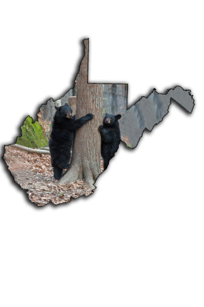 Two young black bear standing by tree