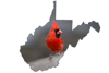 State bird of West Virginia