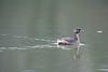 Ducks in water on pond sprinkling