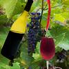 Grape refill