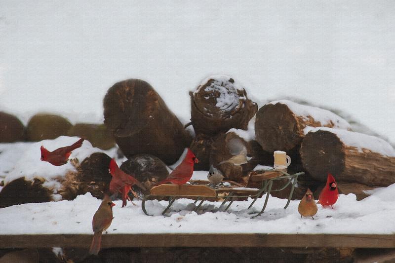 Cardinals everywhere