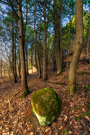Beautiful forest scene with a big stone in the foreground. Large depth of field.