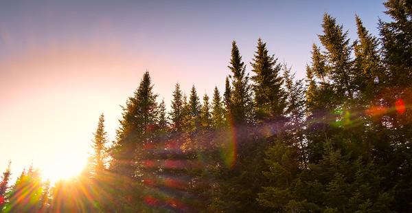 Pine and sun landscape