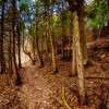 Beautiful scene from an enchanted forest. Soft glow effect.