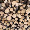 Spruce logs wood