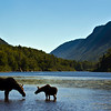 Beautiful silhouette female moose with is calf. Hills and river background from National park Jacques Cartier Quebec Canada.