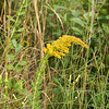 Photo from Lighted Path trip of species seen today. What is it?<br /> <br /> Hint: Lauren L. can help you.