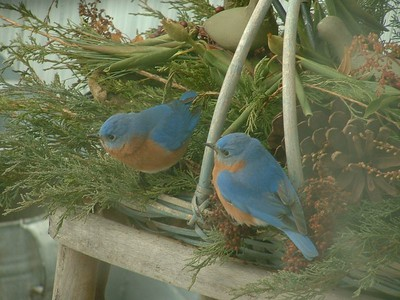 Kennedy Farm Bluebird Project 2005