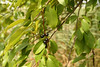 Species H, a closer look.
