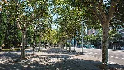 Diagonal Lateral Street Classic Pedestrian Tree Monument July Classic Bcn-1