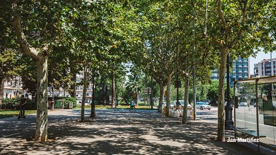 Diagonal Lateral Street Classic Pedestrian Tree Monument July Classic Bcn-6