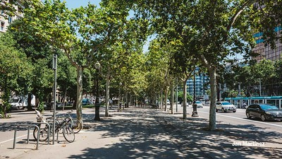 Diagonal Lateral Street Classic Pedestrian Tree Monument July Classic Bcn-3