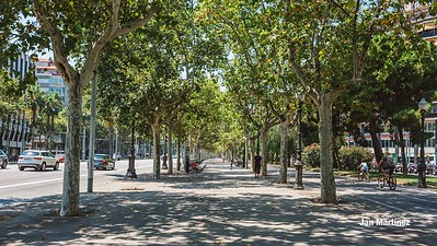 Diagonal Lateral Street Classic Pedestrian Tree Monument July Classic Bcn-4
