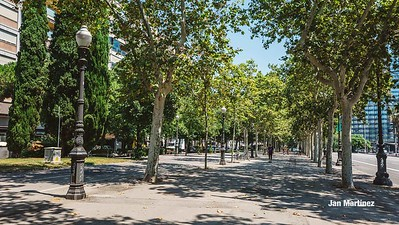 Diagonal Lateral Street Classic Pedestrian Tree Monument July Classic Bcn-2