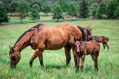 Electric Gold & 2020 Foal