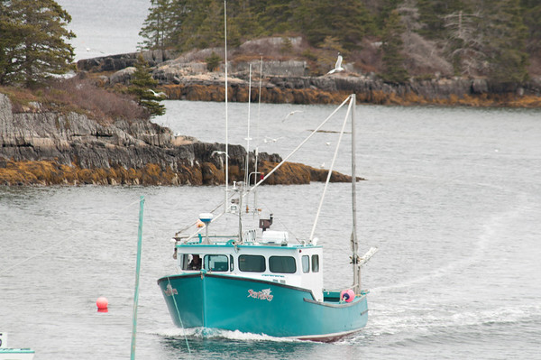 Our neighbour Dany coming in from lobster fishing - note the seagulls around the boat.