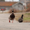 Some of the local inhabitants taking a stroll!