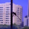 Same clubtail - Dubai Media City, 06/06/2012, 6 p.m.