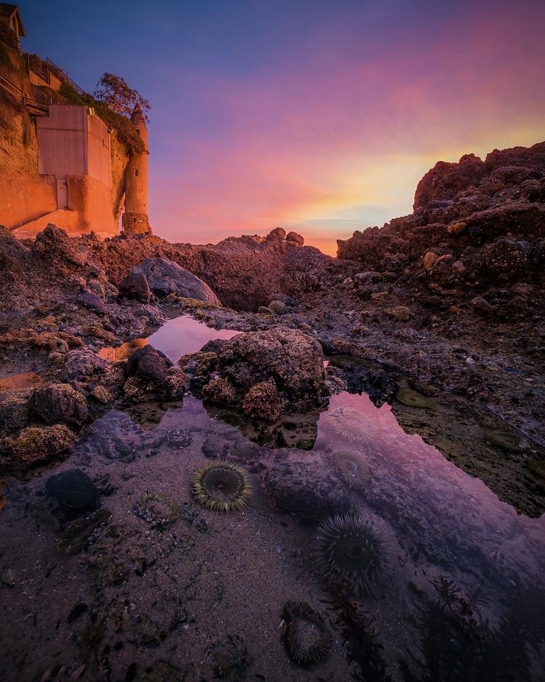 Sea Anemones in Tide Pool - Laguna Beach, CA