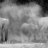 Dust Bathers