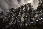 Kisatchie by Moonlight 2