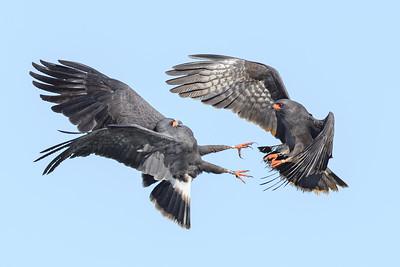 Aerial Aggression