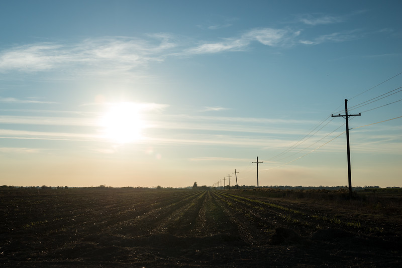 Empty Sugar Cane Field in the Afternoon Sun, No 1