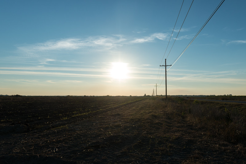 Empty Sugar Cane Field in the Afternoon Sun, No 2