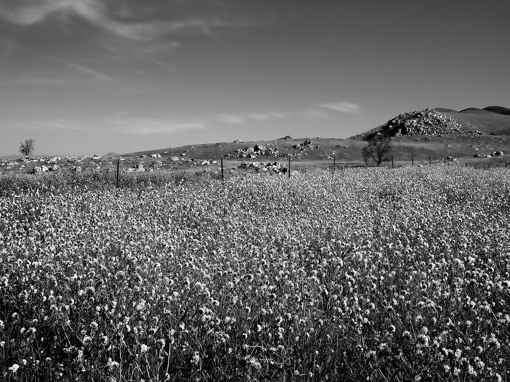 Wildflowers Monochrome