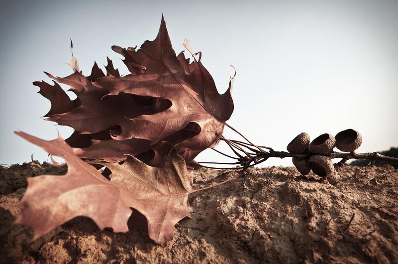 Bunch of Fallen Leaves