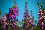 Purple Flower, Blue Sky