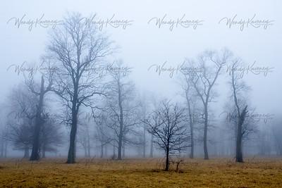 Indiana Fog