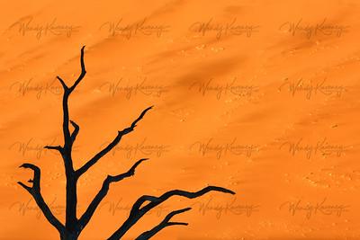 Black Tree against Orange Sand